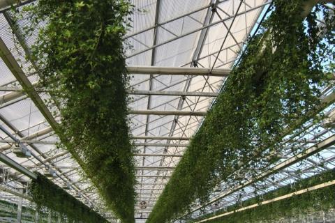 Circuits botaniques en Belgique